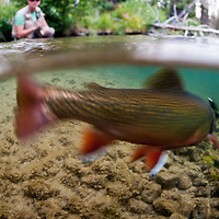 An angler fights a brook trout on the Upper Deschutes.