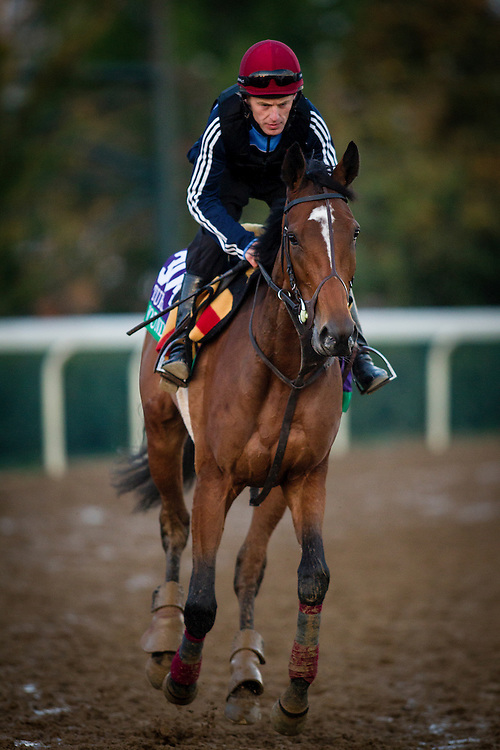 October 29, 2015:   Found (IRE), trained by Aidan P. O'Brien and owned by Michael Tabor, Derrick Smith & Mrs. John Magnier, exercises in preparation for the Longines Breeders' Cup Turf at Keeneland Race Track in Lexington, Kentucky Alex Evers/ESW/CSM