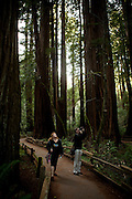 Carol Schaffer, left, and Richard Chandler, right, look up at the redwoods in Muir Woods National Monument, January 26, 2011.