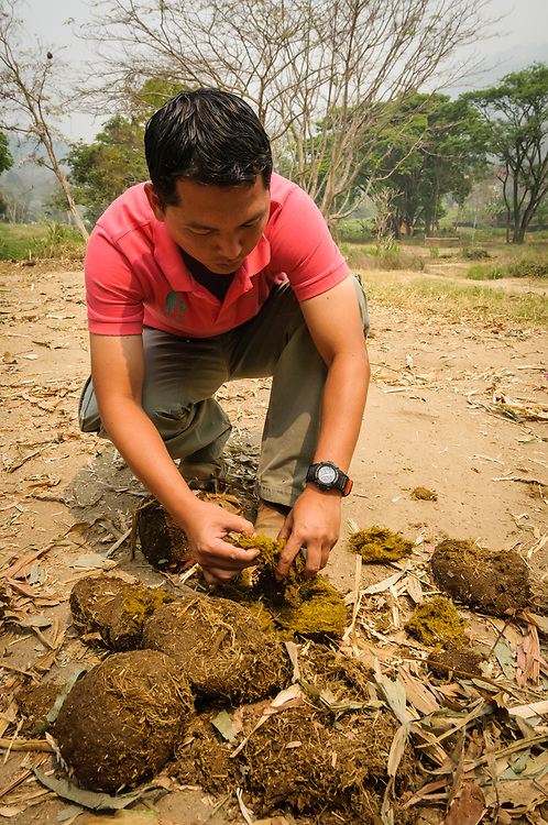 "Patara Elephant Farm owner Terrapat ""Pat"" Trungpakan examines elephant dung as a means to gauge the health of an elephant; Chiang Mai, Thailand."