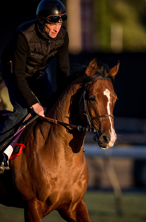 Olympic Glory trains for the Breeders' Cup Mile at Santa Anita Park in Arcadia, California on October 31, 2013. (Alex Evers/ Eclipse Sportswire)