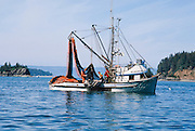Alaska. Commercial fishing seine boat hauling a net ful of pink salmon. Tutka Bay, Kachemak Bay.