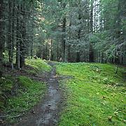 Forest - Skog