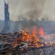 Piles of slash are burned to clear the rainforest land for agricultural production near Onane, Democratic Republic of the Congo, May, 2009.