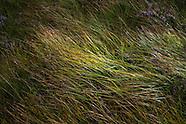 Nature_Textures