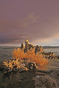 Early Morning Sun Lights up Reeds and Tufa at Mono Lake in the Eastern Sierra of California