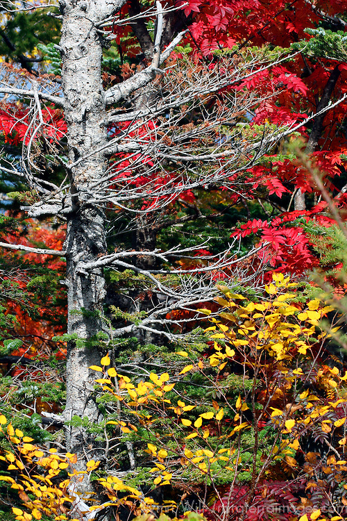 Asia, Japan, Hakone. Fall colors of the Fuji-Hakone-Izu National Park.
