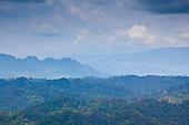 Peradayan Forest Reserve Brunei