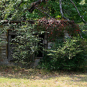An overgrown, very old, horse shed in a Georgia field.