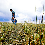 A farmer and his son look over the damage after a hail storm destroyed their wheat field