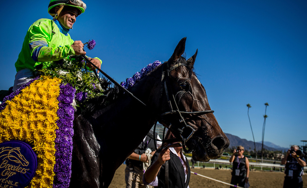 Ria Antonia, ridden by Javier Castellano wins the Breeders' Cup Juvenile Fillies on November 2, 2013 at Santa Anita Park in Arcadia, California during the 30th running of the Breeders' Cup.(Alex Evers/ Eclipse Sportswire)