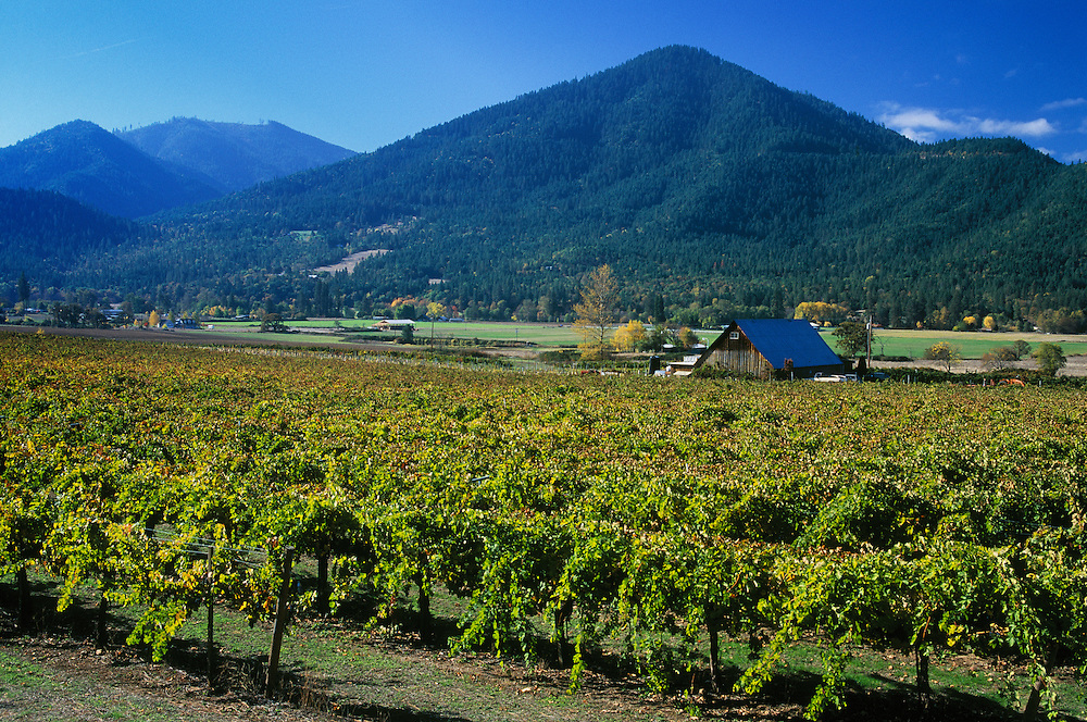 Valley View Winery vineyards in the Applegate Valley of Southern Oregon..