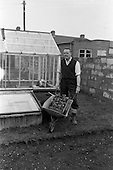 1963 - Ken Hill gardening at his home