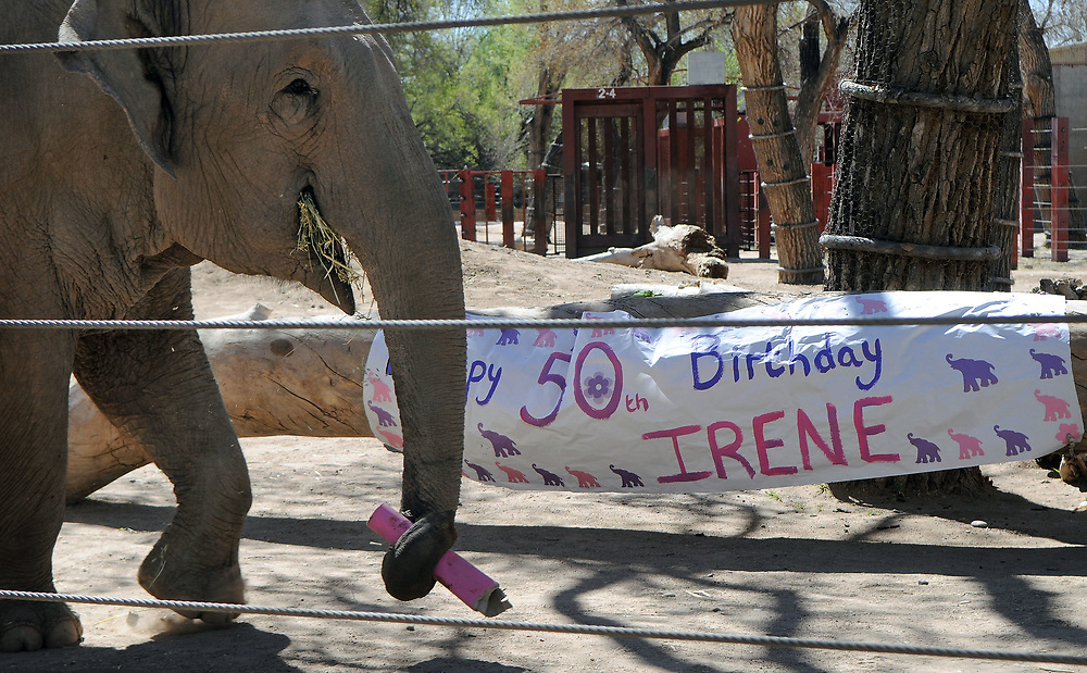 jt032517i/a sec/jim thompson/  Irene walks by her 50th birthday party sign.  Friday March 24, 2017. (Jim Thompson/Albuquerque Journal)