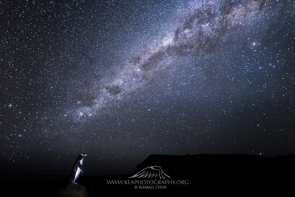The awe-inspiring Milky Way bears semblance to a celestial flipper, reaching out to a solitary penguin standing on a rocky outcrop in the Curio Bay Fossil Forest.  With a declining population of less than 5000, the endangered Yellow-eyed Penguin is one of the world&rsquo;s rarest penguins, and found only in New Zealand.<br />