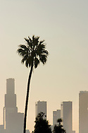 Golden morning light on downtown Los Angeles skyscrapers and palm tree