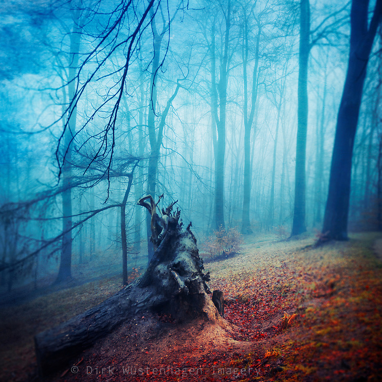 Remains of a tree uprooted in a storm. Captured on a misty autumn day.<br /> Prints: http://society6.com/DirkWuestenhagenImagery/silent-sadness_Print#1=45