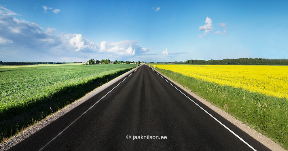 Road through yellow canila filed in Tartu county, Estonia. Sky scenic, clouds and asphalt.