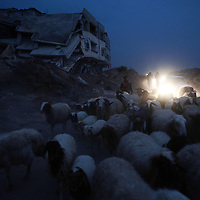 Palestinians follow a herd of sheep in the Israeli-bombed Jabalia in the northern Gaza Strip on January 23, 2009. A Hamas delegation from Gaza crossed into Egypt for talks to shore up the ceasefire with Israel which ended a 22-day assault on the coastal strip, a border official said. Israel and Hamas have observed their own ceasefires since January 18 when Israel ended Operation Cast Lead leaving a trail of devastation and 1,330 Palestinians dead, according to doctors. Egypt is trying to secure a durable ceasefire between Israel and Hamas and the reopening of crossings.