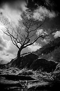 A dark tree against a dark, cloudy sky in the Lake District, England<br /> <br /> All posters are self-fulfilled. Prices vary depending on poster size and quality. Delivery is usually &pound;3.75.<br /> <br /> For poster orders please email: poster@paulineayates.com