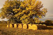 Hay Bales, Northern Montana