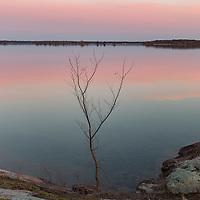 http://Duncan.co/small-tree-on-shoreline-at-dusk