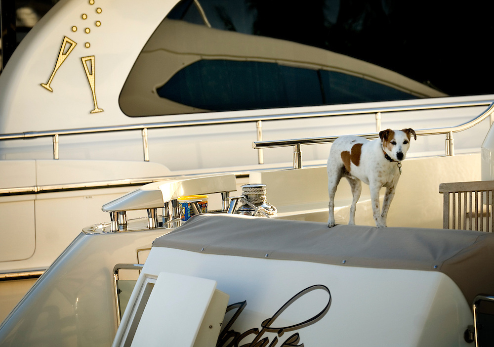 Travel story about Fort Lauderdale, Florida.A dog abord a luxury yacht...Photographer: Chris Maluszynski /MOMENT