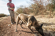 Fikra Gedreamlak, an UNMAS Mine Detection Dog Handler, conducts quality assurance of an area that has just been cleared using ground penetrating radar and a large loop metal detector on the Pariang-Panakuach route, north of Bentiu.<br /> <br /> Photo: UNMAS/ Martine Perret