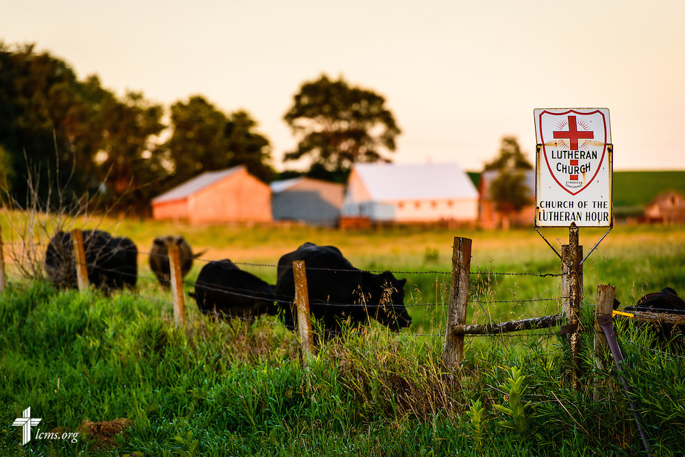 Cattle graze on a farm near Mission Central on Saturday, July 18, 2015, in Mapleton, Iowa. LCMS Communications/Erik M. Lunsford
