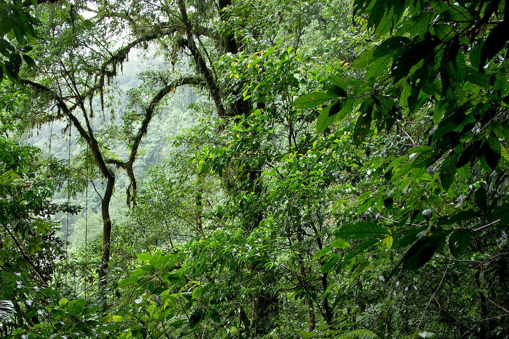 Costa Rica, La Fortuna, Rainforest along Fortuna River