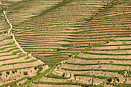 Symington Family Estates - Quinta do Vesúvio vineyards