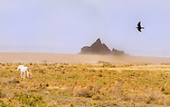 White Horse, Raven, Navajo Indian Reservation, New Mexico