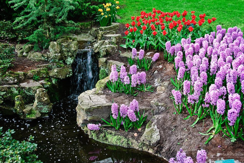 Tiny waterfall at Keukenhof Spring Tulip Gardens, Lisse, The Netherlands.
