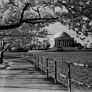Infrared cherry blossom trees and the Thomas Jefferson Memorial, Tidal Basin, Washington, DC