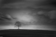 A lone tree stands on a hill in Bavaria, Germany, just outside of Garmische.