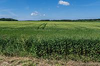 Fields in Denmark