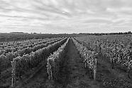 Vineyard Black & White