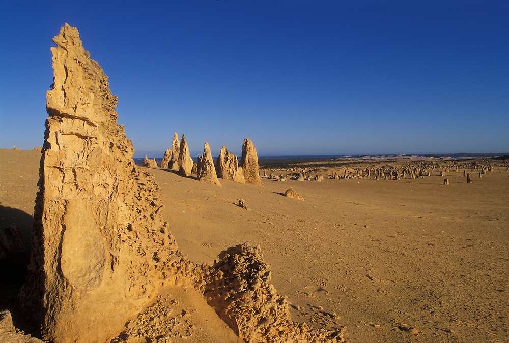 Australia, Western Australia, Early morning sun lights limestone pinnacles in Nambung National Park near town of Cervantes