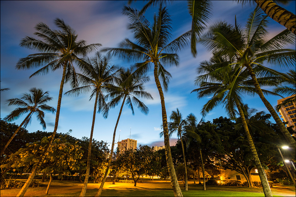 Coconut grove at the Fort DeRussy Armed Forces Recreational Center of the Pacific park on Kalakaua Ave in Waikiki, HI.  ©PF Bentley