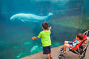 351021-1043G.Huey ~ Copyright: George H.H. Huey ~ Children watching the live Beluga whales at the Mystic Aquarium.  Mystic, Connecticut.