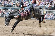 Bareback Bronc, Miles City Bucking Horse Sale, Miles City, Montana