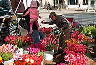 .Flowers for sale at the farmers market. .The Dane County Farmers Market is held Saturday mornings from early April through early November on the Capitol Square in Madison, Wisconsin.