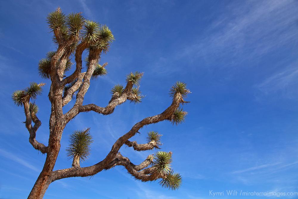 USA, California, Joshua Tree. HIdden Valley in Joshua Tree National Park.
