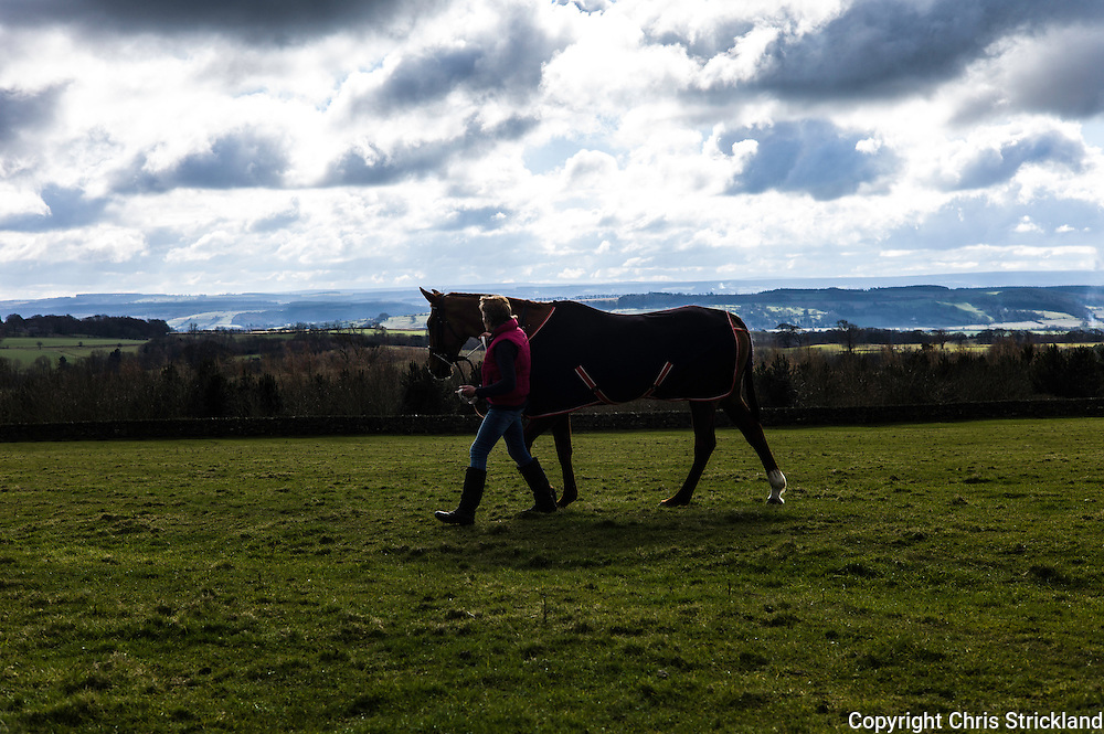 Corbridge, Northumberland, England, UK. 28th February 2016. Trainer Di Walton walks racehorse Durban Gold prior to racing at the Tynedale Hunt annual Point to Point horse racing fixture.
