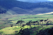 Lower valleys of the Horton Plains.