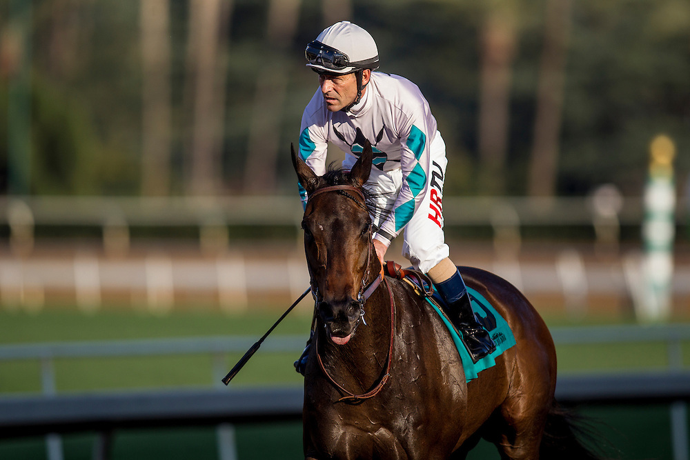 January 31 2015: Avnzare with jockey Gary Stevens up wins the Arcadia Stakes at Santa Anita Park in Arcadia CA. Alex Evers/ESW/CSM