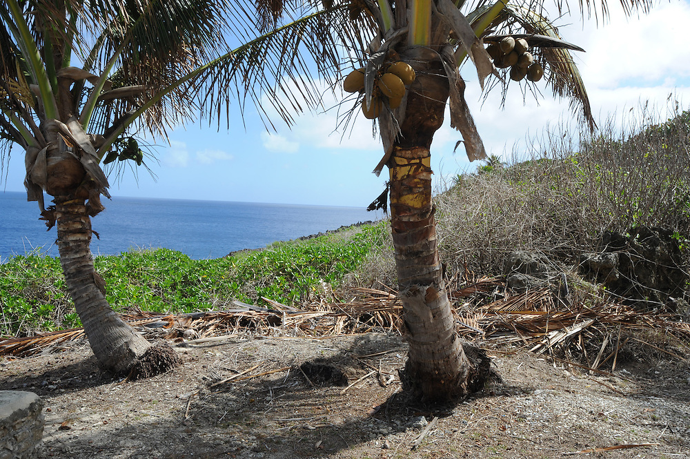 Coconut trees on the coastline, Pacific Mission 2012, Alofi, Niue, Wednesday, July 25, 2012. Credit:SNPA / Ross Setford