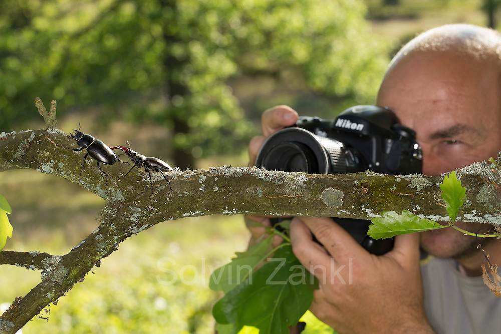 Nature photographer Solvin Zankl taking close up images of the Stag beetle (Lucanus cervus). The Biosphere Reserve 'Niedersächsische Elbtalaue' (Lower Saxonian Elbe Valley), Germany