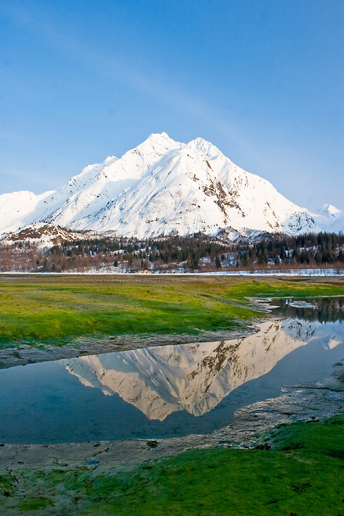A colorful image featuring a clear blue sky, snowy white Mt. Case (4,020'), a green algal intertidaly zone and the mountain reflected in a tide pool.