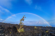 Double rainbow over ohia tree in growing in lava flow; Chain of Craters Road, Hawaii Volcanoes National Park.